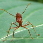 Christian Perspective: Lessons from the Ant