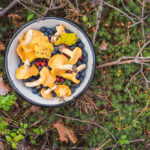 Save Money by Foraging | a Guide for Beginners